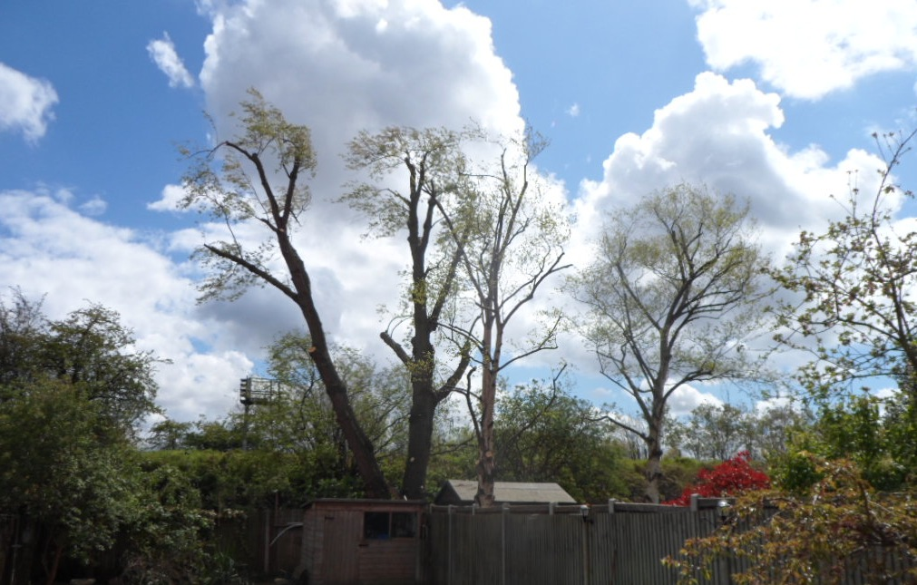 Tree Surgery Gallery G Amp G Garden Services